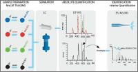 MeCAT proteomics and protein quantification